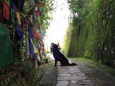 祈るようにルンタを見上げる犬